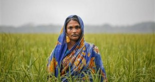 In this Nov. 17, 2015 photo, Saleha, 38, who lost her land to river erosion, stands in a field that she farms with her husband in exchange for a place to stay in the island district of Bhola, where the Meghna River spills into the Bay of Bengal, Bangladesh. A study in November suggested 470 million to 760 million people worldwide could lose their land to rising seas if global warming is allowed to continue unbridled, according to work by scientists at Climate Central, a nonprofit research and news organization. (AP Photo/Shahria Sharmin)