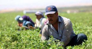 Mideast Jordan Syrians at Work