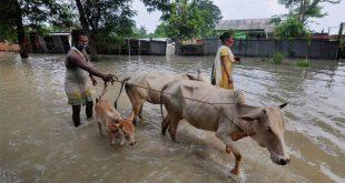 Assam flood: ASDMA releases emergency helpline number